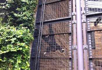 動物園 シロテテナガザル