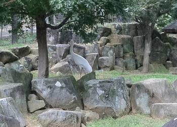 動物園 ツル