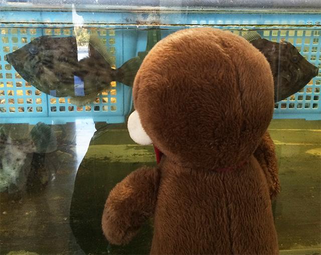 沼津 魚がし寿司で食事をするさるのダニエル