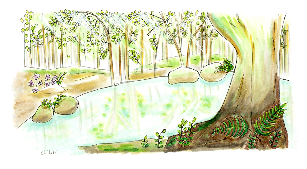 はしもとクリニック経堂さま 森の中の泉