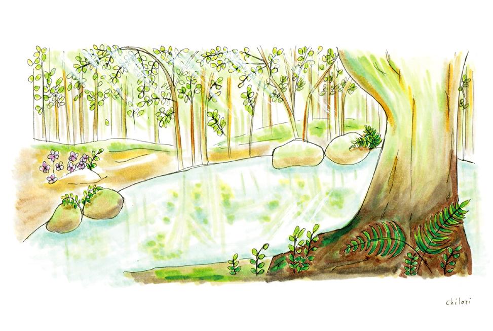 はしもとクリニック経堂様 ポストカード作成 森の中の泉 イラスト