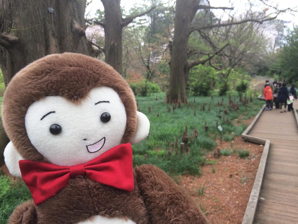 さるのダニエルが新宿御苑にお花見に行ってきました
