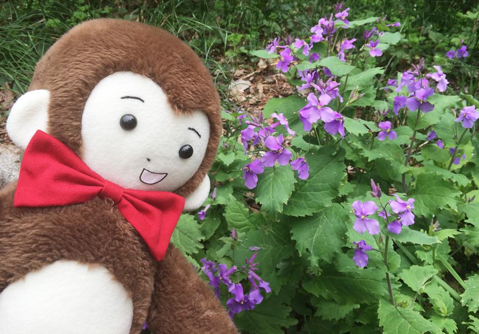 さるのダニエルと紫の花(新宿御苑にて)