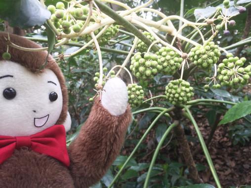 さるのダニエルとジャングル(新宿御苑にて)
