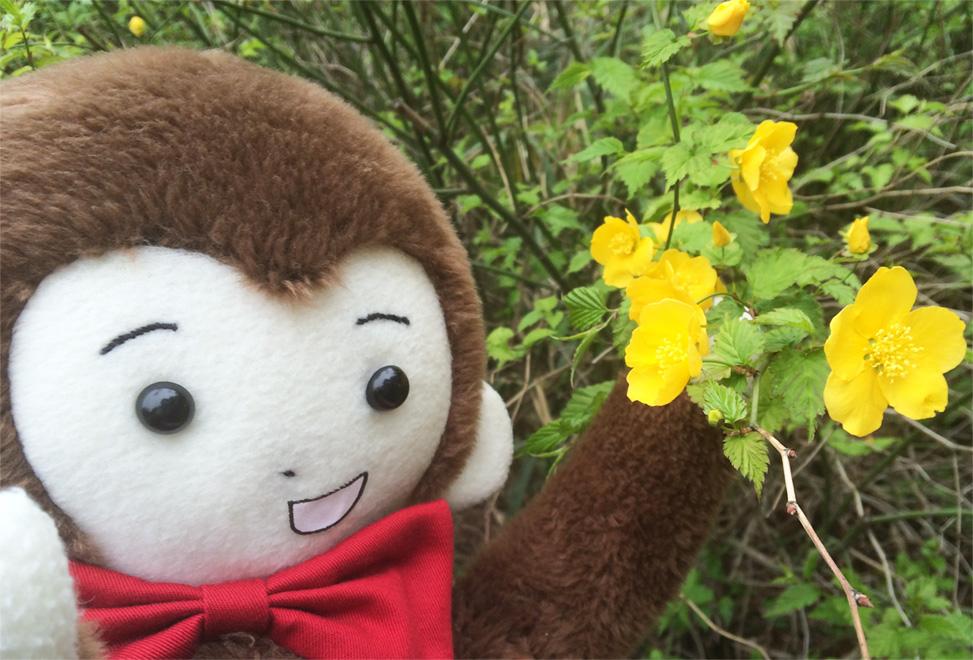 さるのダニエルと黄色い花(新宿御苑にて)