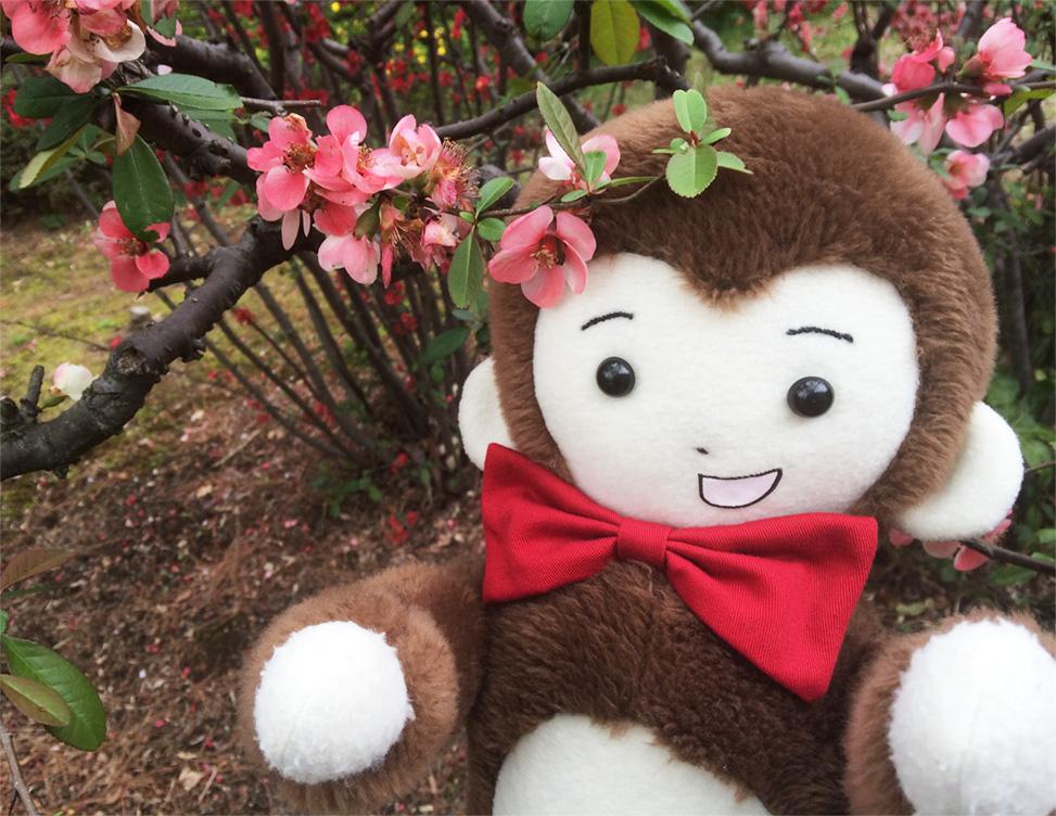 さるのダニエルとボケの花(新宿御苑にて)